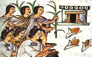 El Maíz, planta sagrada de los Aztecas