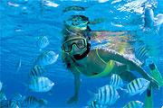 Plongée près de Isla Mujeres