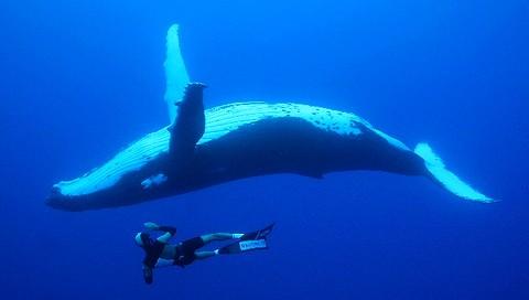 cetaces-en-polynesie
