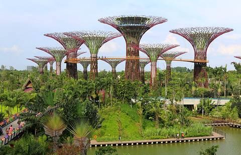 Magazine du tourisme actualit les jardins de la baie de for Jardin botanique singapour