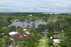 arbres de la forêt amazonienne